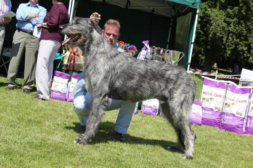 Farnleigh - Irish Wolfhound 2013 06 09 (52)