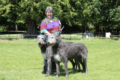 Farnleigh - Irish Wolfhound 2013 06 09 (55)