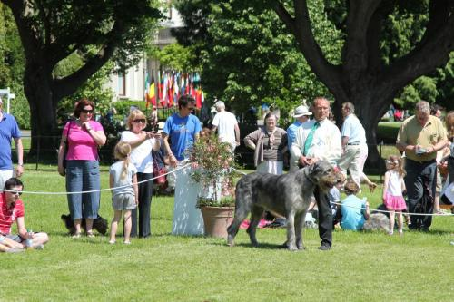 Farnleigh - Irish Wolfhound 2013 06 09 (56)
