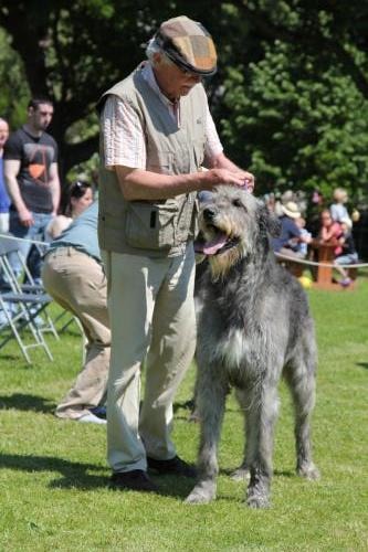 Farnleigh - Irish Wolfhound 2013 06 09 (57)