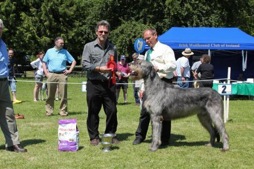 Farnleigh - Irish Wolfhound 2013 06 09 (59)