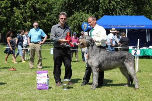Farnleigh - Irish Wolfhound 2013 06 09 (60)