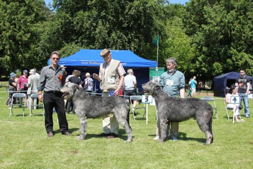 Farnleigh - Irish Wolfhound 2013 06 09 (61)