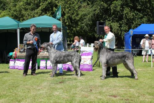 Farnleigh - Irish Wolfhound 2013 06 09 (65)