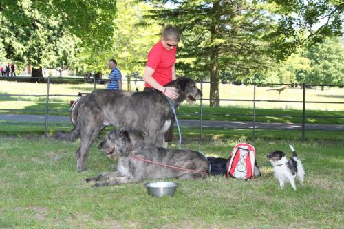 Farnleigh - Irish Wolfhound 2013 06 09 (68)