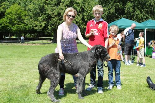 Farnleigh - Irish Wolfhound 2013 06 09 (69)