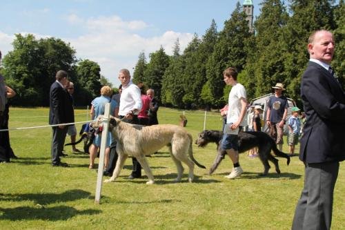 Farnleigh - Irish Wolfhound 2013 06 09 (7)