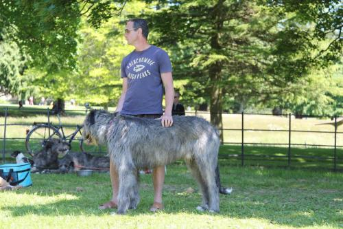 Farnleigh - Irish Wolfhound 2013 06 09 (79)