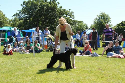 Farnleigh - Irish Wolfhound 2013 06 09 (82)