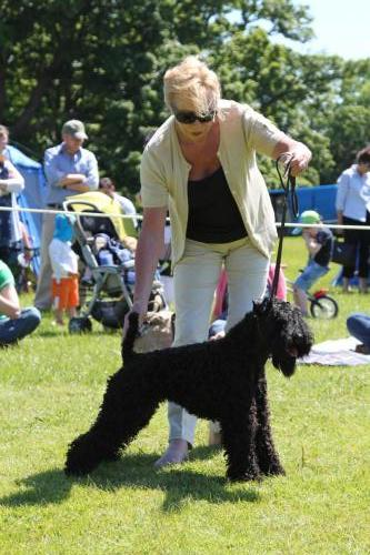 Farnleigh - Irish Wolfhound 2013 06 09 (83)