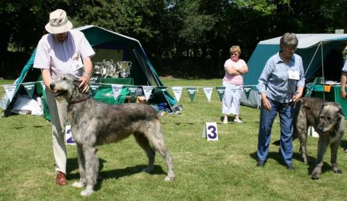 Res Green Star Dog 011